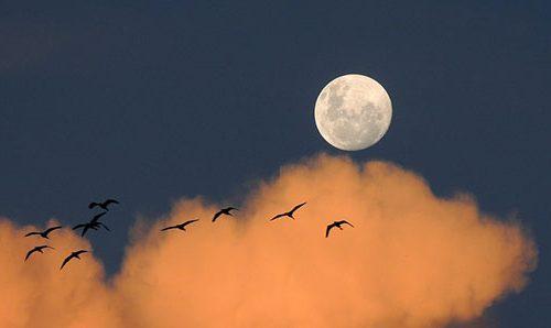 Traumexpress zum Mond