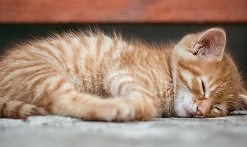 Süße schlafende Katze